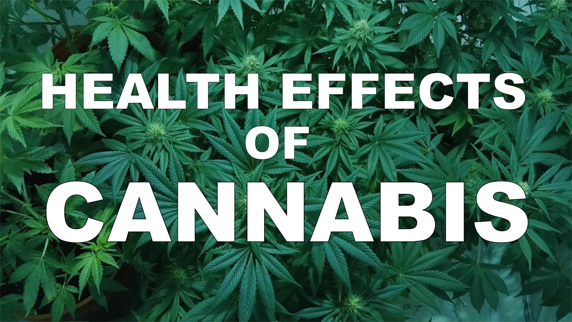 What are the Health Effects of Cannabis?