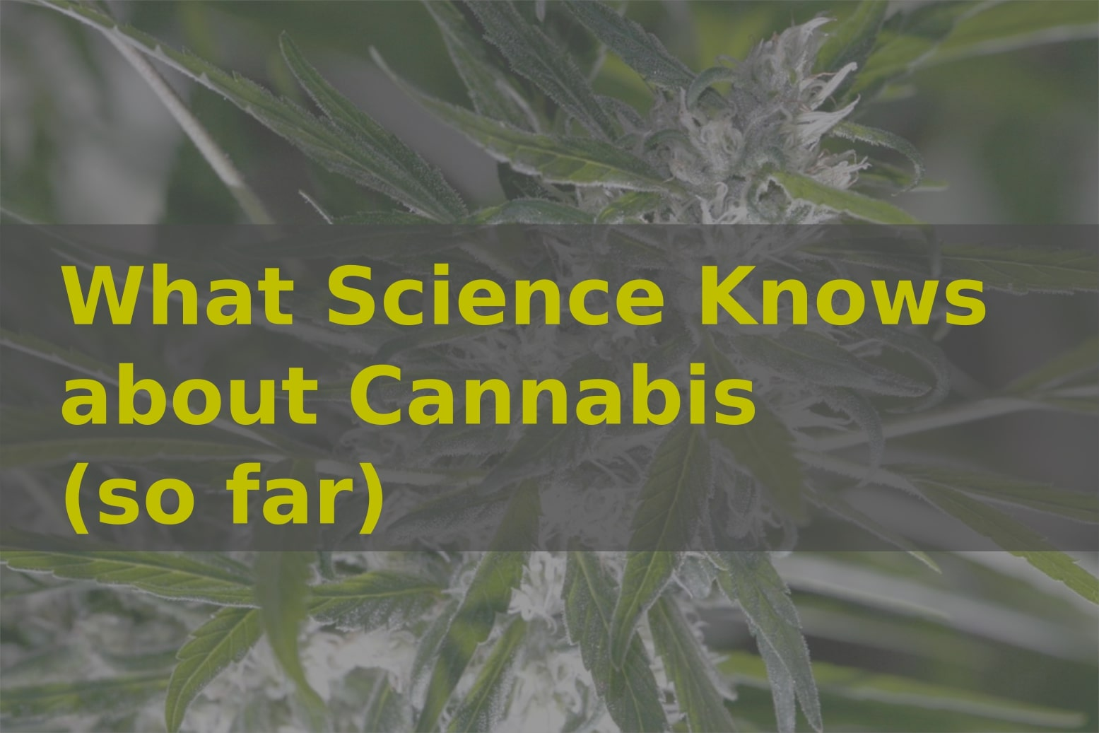 What Science Knows about Cannabis